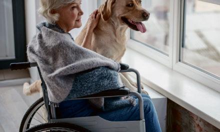 Découvrez 5 bienfaits de la zoothérapie chez les aînés